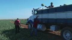 Truck being loaded with watermelons Stock Footage