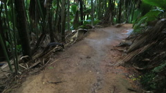 Tourist trail in Vallee de Mai Nature Reserve Stock Footage
