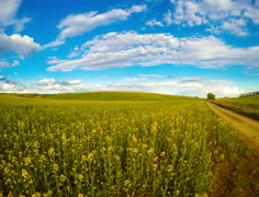 Clouds over the Rapeseed Fields. Time Lapse 4K Stock Footage