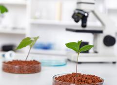Genetically modified plant tested in petri dish .Ecology laborat - stock photo