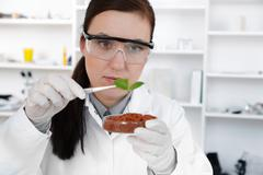 Stock Photo of study of genetic modified GMO plants in the laboratory