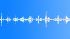 Pigeon Sound Sound Effect
