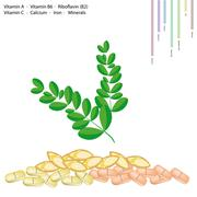 Stock Illustration of Moringa Leaves with Vitamin A, B6, B2 and C