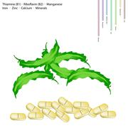 Winged Beanswith Vitamin B1 and Vitamin B2 Stock Illustration