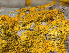 Lichens on the Trunk of a Poplar - stock photo