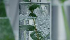 Medicinal plants in glass with water - stock footage