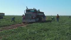 Truck loaded in watermellon field Stock Footage