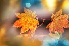 Stock Photo of Colourful leaves in autumn season