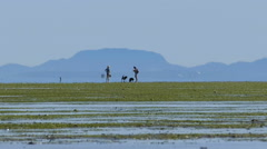 Two Ladies Walking Their Dogs At Low Tide Stock Footage