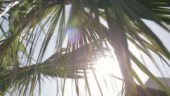 Sun's rays through palm tree branches - stock footage