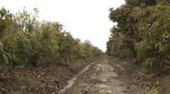 Rural Peru scenes Stock Footage