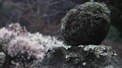 Rack focus of mossy rock, with bright leaves in background Stock Footage