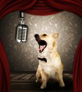 Dog in singing performance on stage - stock photo