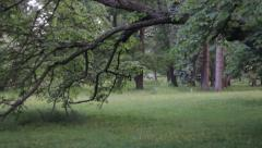 Trees in the park evening breeze - stock footage