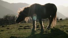 Horse pony neigh whinny Stock Footage