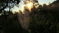 morning cobweb - stock footage
