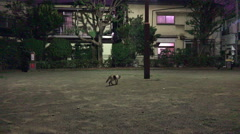 Tokyo Residential Neighborhood At Night With Stray Cat Stock Footage