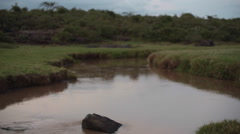 Calm river flowing in Kenya savannah, pan left - stock footage