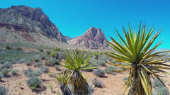 Spring Mountain Ranch State Park- Joshua Trees & Mountains Stock Footage