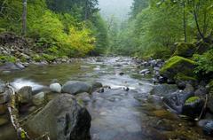 Wilderness Creek Stock Photos