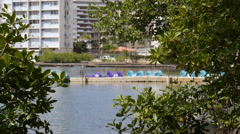 CONDADO LAGOON MANGROVE TREES and paddle boats - stock footage