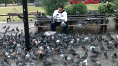 Don't Feed The Pigeons Stock Footage