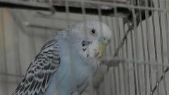 Parrot in  a  Cage Stock Footage
