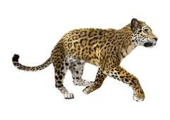 Jaguar Stock Illustration