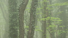 Strong Fog in the Beech Forest. - stock footage