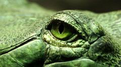 Eye of a reptile: green reptile, lizard, lizard, iguana, turtle, snake Stock Footage