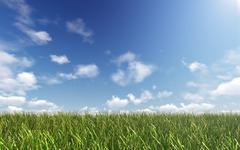 Still sky over green land - stock illustration