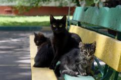 Cat and kittens Kuvituskuvat