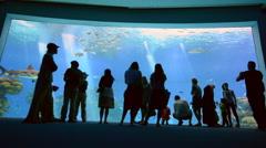 Visitors in the Shark Pool in Eilat, Israel Stock Footage