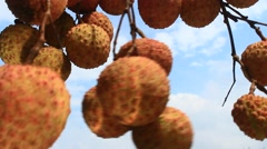 Litchi and sky Stock Footage