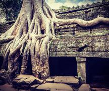 Stock Photo of Ancient ruins and tree roots, Ta Prohm temple