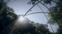 Sun shines through tall green grass with dew and a mosquito on a blade of grass Stock Footage