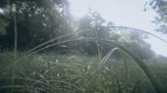 Dew on a green high grass and sun and trees Stock Footage
