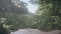 Gnat mosquito crawls to bite the hand,, the middle of the swamp thicket Stock Footage