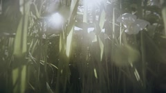 Sun hardly breaks through the thick green grass close-up swamp Stock Footage