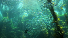 Underwater eco system of marine life Stock Footage