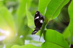 A brown butterfly on a green plant leaf. Stock Photos