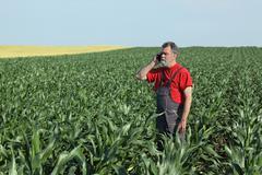 Agricultural scene, farmer in corn field - stock photo