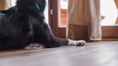 Dog on floor yawns and take a rest 4K Stock Footage