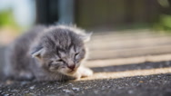 Stock Video Footage of Baby kitten alone outside close up
