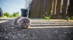 Abandoned baby kitty on asfalt Stock Footage