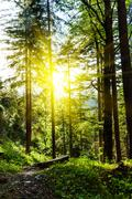 Green forest with sunrays - stock photo