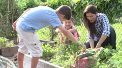 Mother And Children Working On Allotment Together Stock Footage