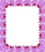 Frame from pink petals of orchid Stock Illustration