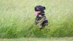 Dog enjoying fresh air in the park - stock footage