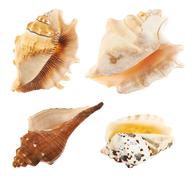 Set of multiple sea shells isolated Stock Photos